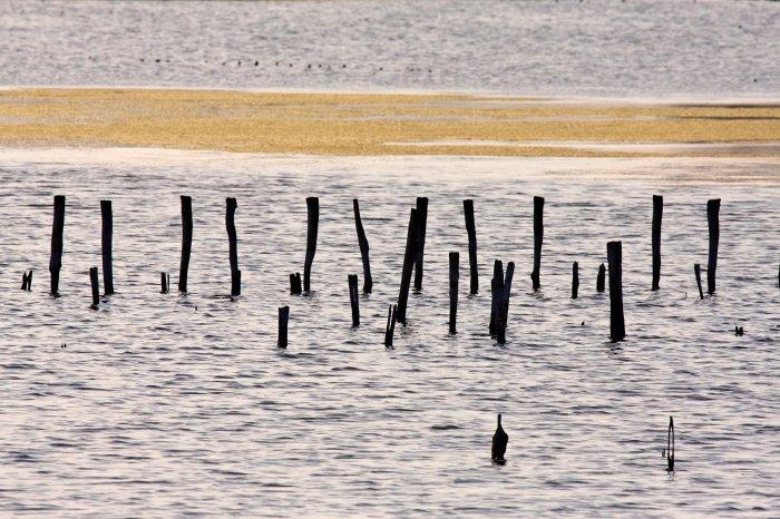 Започна проект за опазване на Поморийското езеро